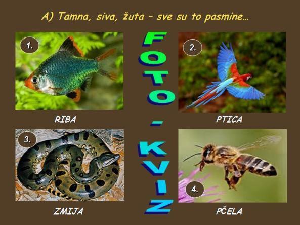 FOTOKVIZ A