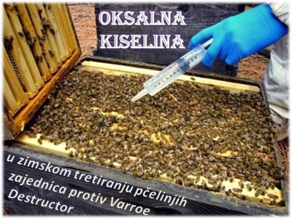 Oksalna kiselina u zaštiti pčela naslovnica